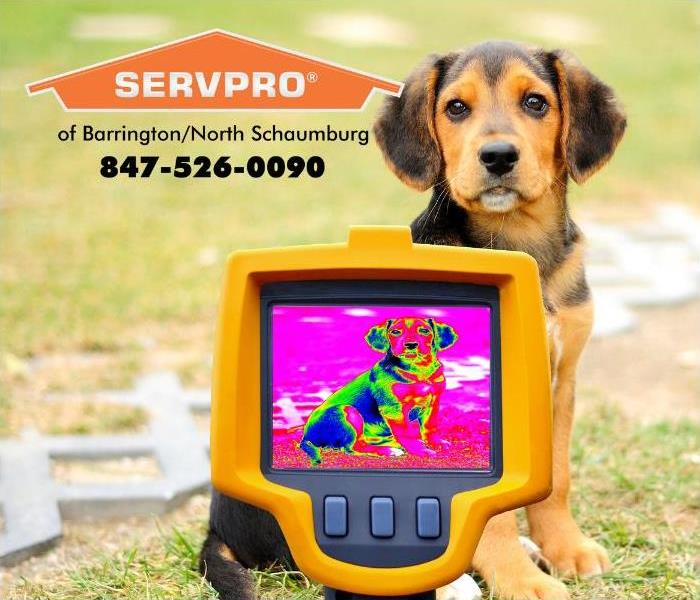A technician is shown using an infrared camera to detect the heat signature of a dog.