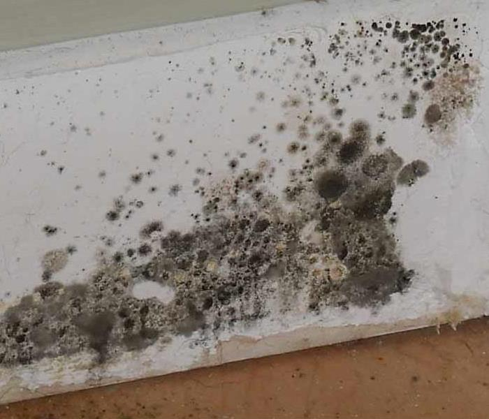 Mold Remediation Schaumburg, Lake Zurich and Barrington 8 Important Facts About Mold